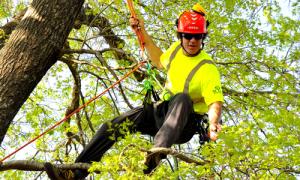 dallas-tree-services