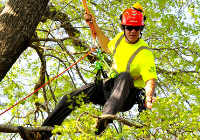 dallas-tree-services