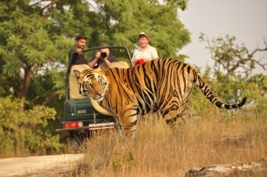Bandhavgarh National park Safari