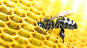 Bees Die from Drinking Carbonated Liquid After a Can is Tossed