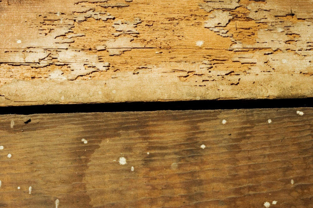 Termite Eggs: What Do They Look Like and How Do You Spot Them?
