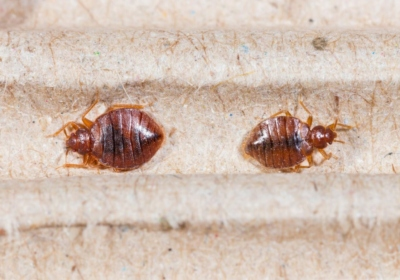 5 Signs of Bed Bugs You Shouldn't Ignore